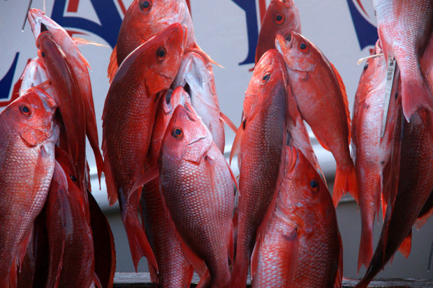 Red Snapper_FlickR