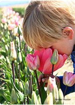 child_sniffing_flower_Amber-Hunter_150x209