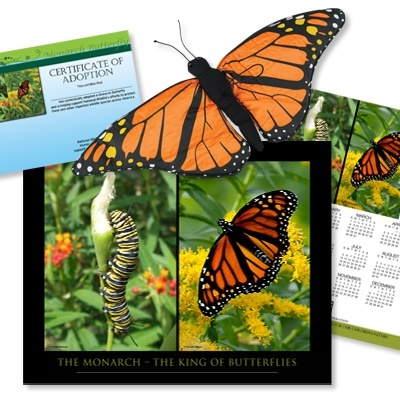 Adopt a monarch butterfly and support pollinator conservation.
