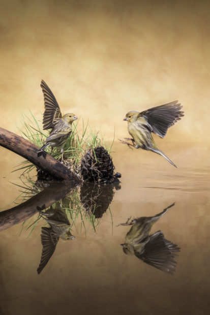 9 Inspiring Quotes for Nature Photographers • The National