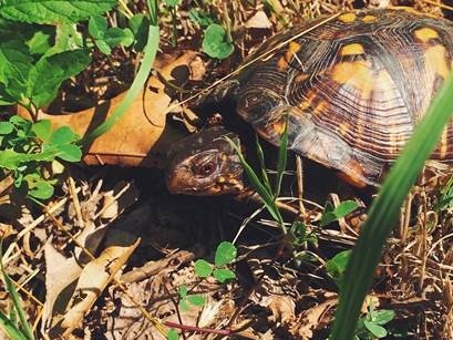8 Tips to Protect Baby Turtles in Your Yard • The National